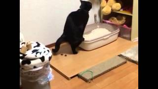 У кота прицел сбился