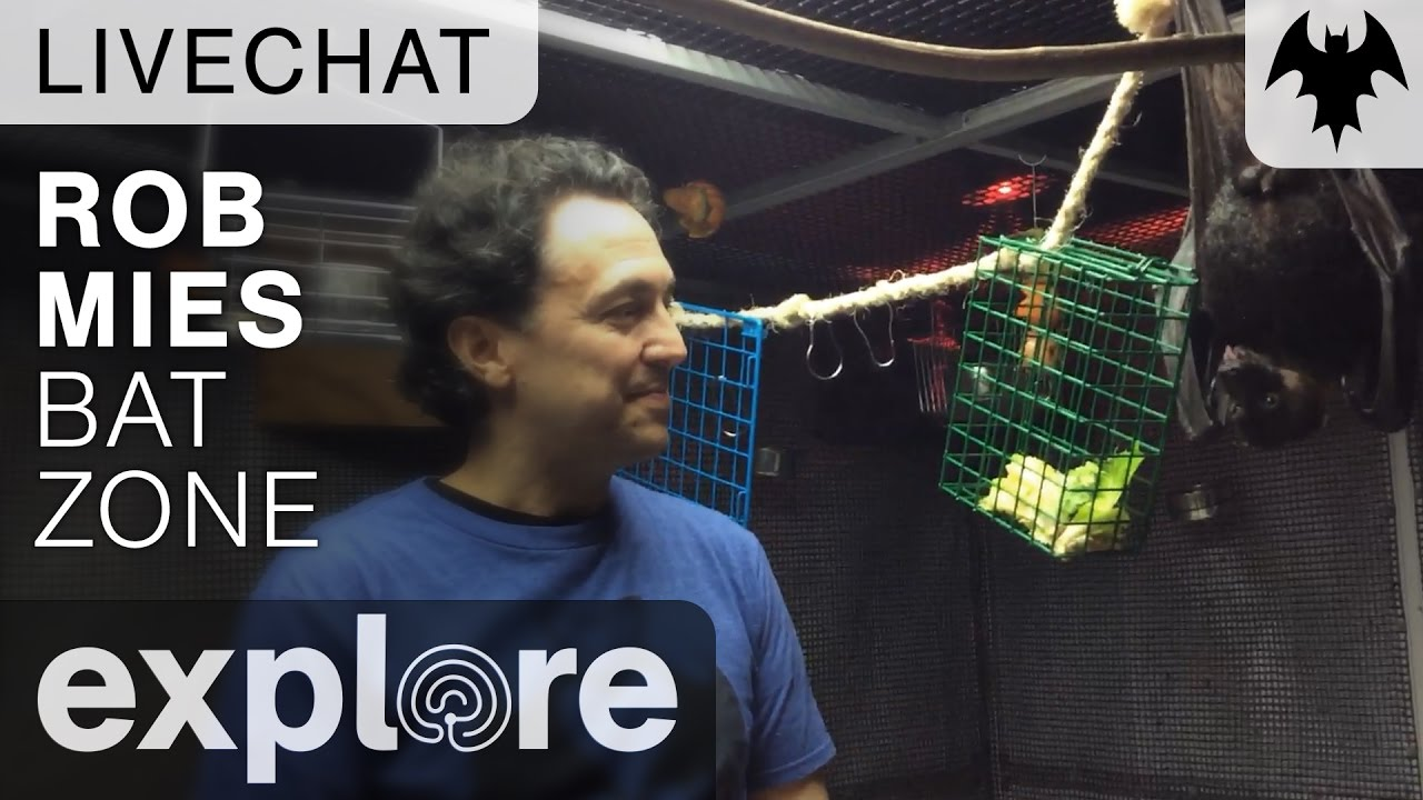 Rob Mies - Organization For Bat Conservation - Live Chat