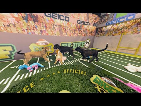 Run and Scrum | Puppy Bowl XII (360 Video)