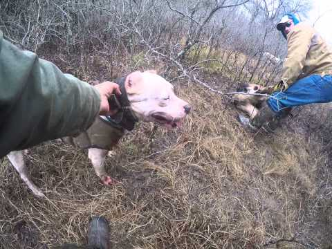 Catching Hogs with Dogs. Ladogos ( Marvin Garrett )