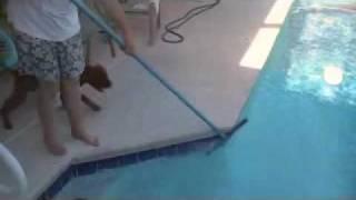 Dogue De Bordeaux Pool Boy