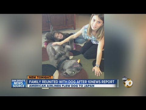 Family reunites with dog left stranded in San Diego due to American Airlines rule