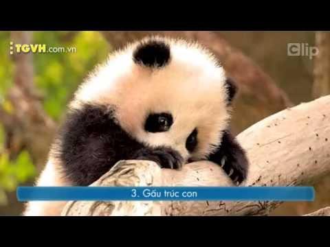 10 loài động vật dễ thương nhất khi còn nhỏ