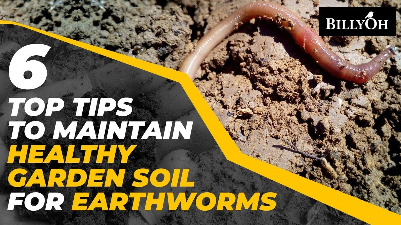 6 Top Tips To Attract Earthworms To Your Garden Eco Friendly