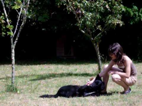 Apprendre a son chien a faire le mort - YouTube
