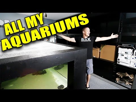 HUGE aquarium gallery update!