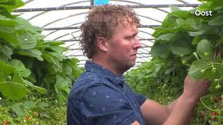 Fruitteler uit Manderveen is blij met de weersvoorspelling