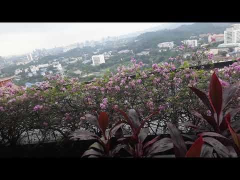 Malaysia Errand: The Balcony view of Telecom Malaysia Tower