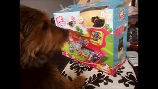 Pet Parade Play World Toy Review