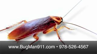MA German Cockroach Extermination & Pest Control
