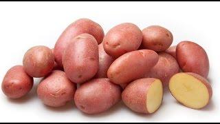 Картофель семенной. Весна 2016