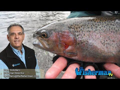March 23, 2017 Long Island Metro Fishing Report with Fred Golofaro