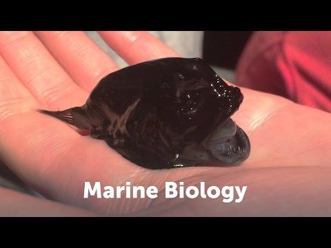 CSUN Marine Biology