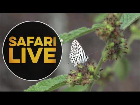 safariLIVE - Sunset Safari - May 16, 2018