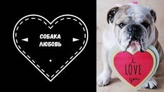 Собака Любовь!