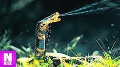 Die 10 Giftigsten Schlangen der Welt