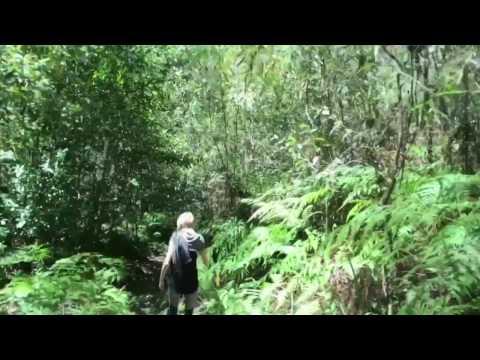 Fairy Bower Falls walk - Morton National Park, NSW