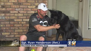 Military Dog Reunited With Soldier 5 Years Later