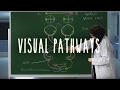 Visual Pathways - UBC Neuroanatomy - Season 1 - Ep 6