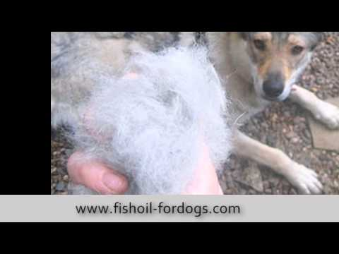 Fish oil for dogs dosage youtube for Fish oil for dogs dosage