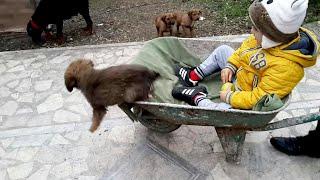 Gambar cover Bilge Kağan El Arabasına Köpeğimiz Tombiği'de Bindirdi Tombik Arabadan Atladı 😄