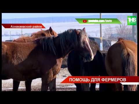 В рамках нацпроекта фермеры Татарстана могут получить грант на открытие дела до 6 млн руб. | ТНВ