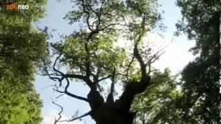 Wild Germany - Schamanismus
