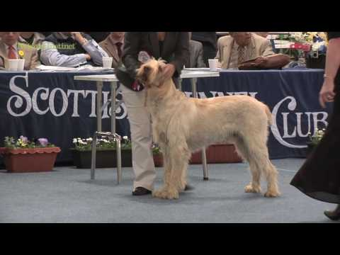 Scottish Kennel Club 2016 - Gundog group FULL