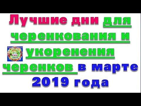 Лучшие дни для черенкования и укоренения черенков в марте 2019 года