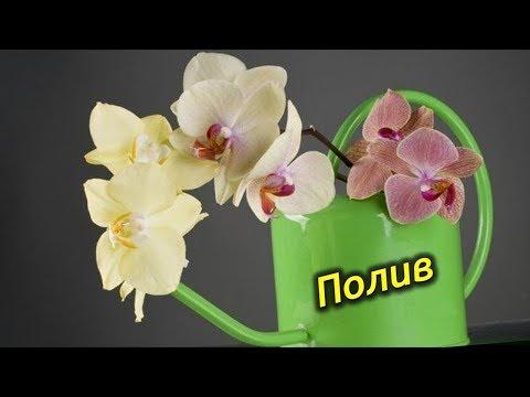 Полив Орхидей! Как правильно поливать Орхидеи!