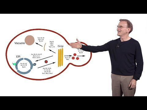 Randy Schekman (HHMI & UCB) 2: Genes and proteins required for secretion