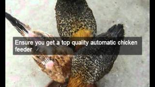 Chicken Feeders | Hens | Napa | Ca | Automatic Chicken Feeder | Feeding Chickens | Poultry Feeders