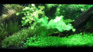 adding co2 to planted tank
