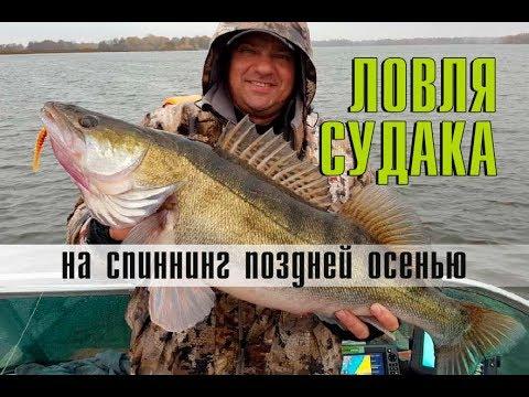 Видео о ловле судака осенью этого года смотреть бесплатно