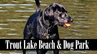 Trout Lake Beach & Dog Park Off-Leash Area