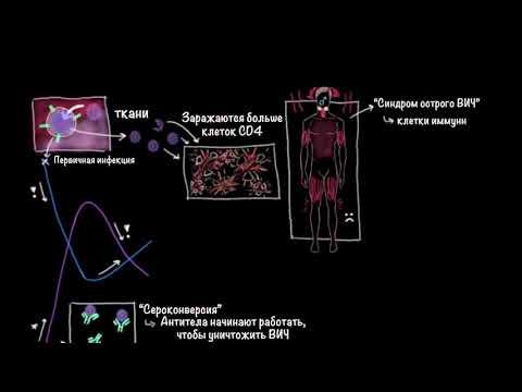 ВИЧ и СПИД | Здоровье | Медицина