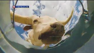 The Daily Joe: Animal Bucket Cam