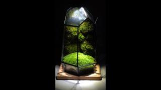 내 책상 위 테라리움 (mini glass terrar…