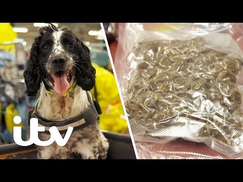 Border Force Sniffer Dog Finds Drugs Hidden in a Package! | Heathrow: Britains Busiest Airport