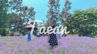 태안 Taean | 팜카밀레허브농원 Kamille Fa…