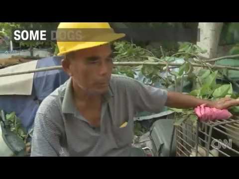 21556 gemeinde fair 002 002 CNN Annual dog meat festival causes outrage
