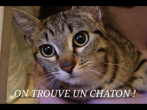 VLOG 1 : On Trouve Un Chaton Blessé Dans Paris !