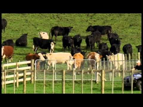 Lake Farm Beef on TVNZ's Rural Delivery show