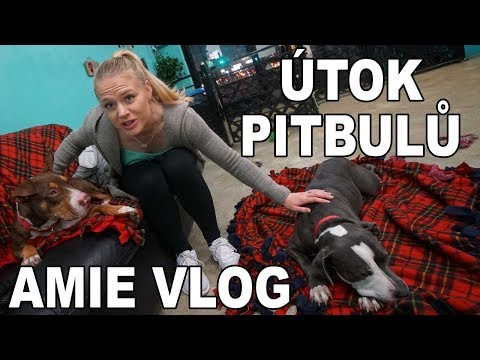 Rvačky Pitbulů v Kavárně. Amie Vloguje na LA Fit Expo.