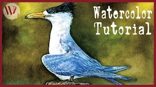 How to Paint a Bird in Watercolor- The Crested Tern- Windy Shih