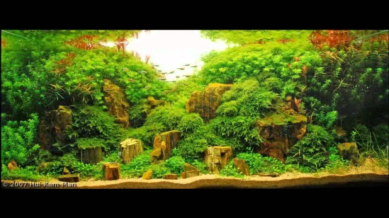 Mejores acuarios del mundo youtube - Los mejores sofas del mundo ...
