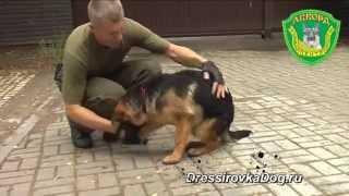 Защитно-караульная служба, немецкая овчарка - Ларри(Профессиональная дрессировка собак, дрессировка немецкой овчарки, защитно-караульная служба., 2010-12-04T21:35:04.000Z)
