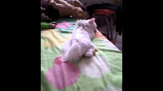 Pisica care doarme