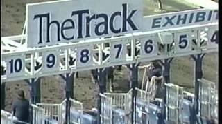 The Great Harvey Wallbanger Buffalo Race