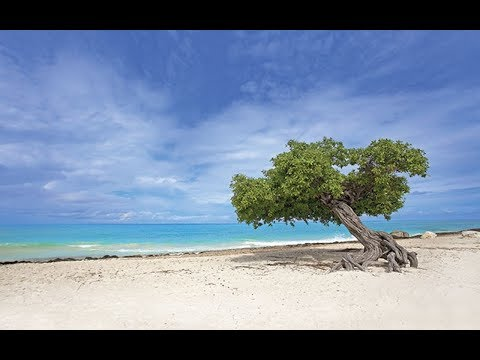 Aruba   Arachi Beach   California Lighthouse   Travel VLOG   2017